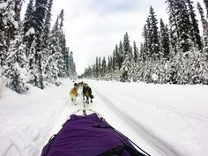 Top activity to do in Lake Louise: dog sledding! Try this fun, intimate activity to explore winter in Lake Louise!