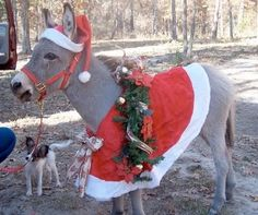 Dominic The Donkey (The Italian Christmas Donkey) was a song that ...