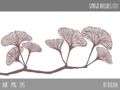 Photoshop brushes  Ginkgo Leaves  Transparent by FiveCatsGraphics