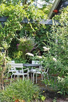 Home & Garden Green Terrace, Painted Rug, Wooden Pergola, Garden Inspiration, Clematis, Outdoor Gardens, Lush, Outdoor Living, Garden Design