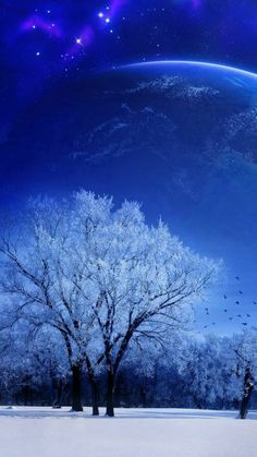 nature, landscape, winter, sky, snow, full moon, trees, birds, evening