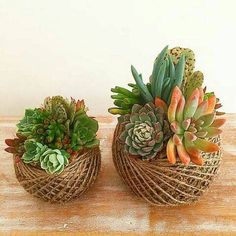 Unique kokedama Ball Ideas for Hanging Garden Plants selber machen ball Succulents In Containers, Cacti And Succulents, Container Plants, Planting Succulents, Container Gardening, Planting Flowers, Deco Cactus, Cactus Flower, Succulent Gardening