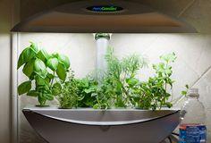 Aerogarden...grows herbs indoors. This is officially on my wishlist!