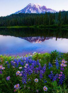 Wildflowers & Mount Rainier by Nitin Kansal, via 500px
