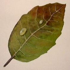 How to paint leaves.  Free watercolor art lesson