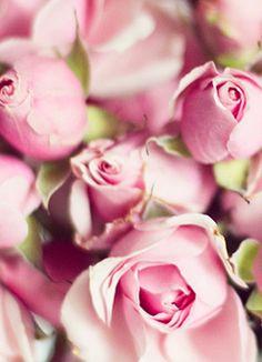 De geur van een roos is de geur van mijn allerliefste moeder ..