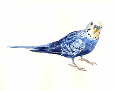 watercolor budgie