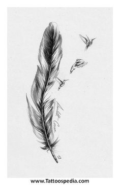 Feather%20Tattoo%20No%20Outline%203 Feather Tattoo No Outline 3