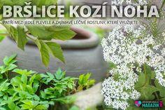 Vegetable Garden, Herbs, Vegetables, Veg Garden, Vegetable Gardening, Veggies, Herb, Veggie Food, Vegetable Recipes