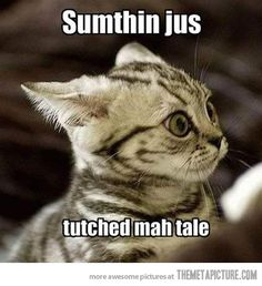 animal pictures cat memes like cat fun - Funny Cat Quotes Funny Animal Memes, Cute Funny Animals, Funny Animal Pictures, Cat Memes, Funny Cute, Funniest Animals, Hilarious, Funny Memes, So Cute