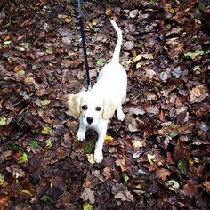 Autumn walk with Lily #goodpuppy
