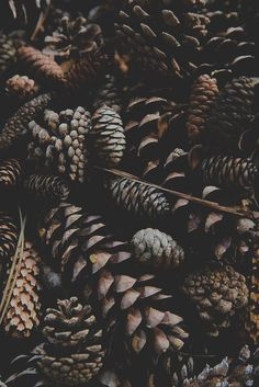 Brown | Pinecones from a fall/winter season