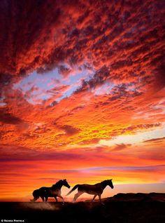 "coiour-my-world: ""Sunset horses ~ by Raissa Portela """