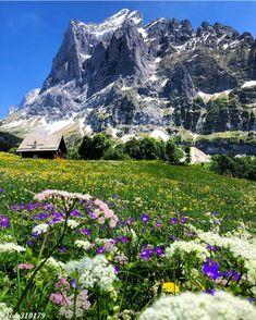 Grindelwald, Switzerland :::::::::::::::::::::::::::::::::::::::::::::::::::::