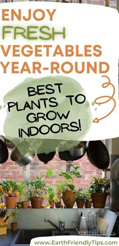Growing Vegetables At Home, Growing Plants Indoors, Herbs Indoors, Planting Vegetables, Healthy Vegetables, Growing Herbs, Growing Flowers, Fresh Vegetables, Indoor Vegetable Gardening