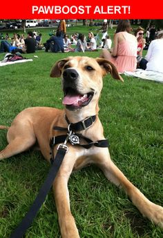 Please spread the word! Lulu was last seen in Daly City, CA 94015.    Nearest Address: daly city  golf cours