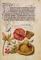 by Joris Hoefnagel, Mira calligraphiae monumenta