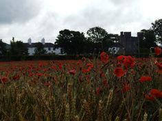 The Poppy Field at Barberstown Castle