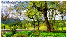 David Hill Vineyards and Winery Photo by Gayle Rich-Boxman David Hill, Countryside, Oregon, Vineyard, Plants, Beautiful, Vineyard Vines, Planters, Plant