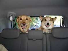 Riding in the back seat with friends
