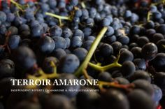 """Get the source... origin makes a great difference, here in Valpolicella"". Two residents launch a brand new international web site dedicated to independent reports on Amarone & Valpolicella wines: http://www.terroiramarone.net"