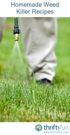 This is a guide about homemade weed killer recipes. Avoid using harmful chemicals by making you own weed killer.
