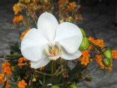 Orquídeas...sempre belas!