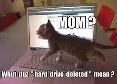 Funny Meme June 2015 : Funny animal pictures of the day u pics funny animals