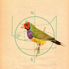 Old animal illustrations + geometric diagrams = Kacie Mills.