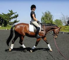How do I sit the trot without bouncing?. A top dressage trainer offers helpful tips on mastering the sitting trot.