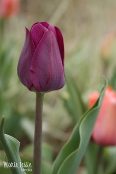 Feeding the Creative Soul with Tulips