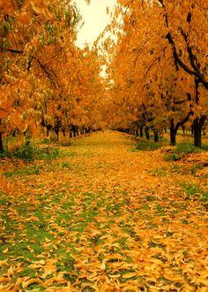 Central Sacramento County Orchard