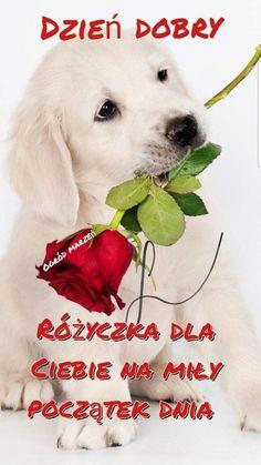 Good Morning, Labrador Retriever, Humor, Disney, Funny, Buen Dia, Labrador Retrievers, Bonjour, Humour