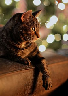 Warming by the Fire by Neilheeney, via Flickr