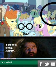 my little pony and Harry Potter ahhhhh Arte Do Harry Potter, Harry Potter Jokes, Harry Potter Universal, Harry Potter Fandom, Harry Potter World, Hogwarts, Harry Potter Pictures, Harry Potter Wallpaper, My Little Pony