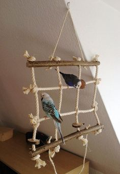 Climbing net for budgerigar, cockatiel & co. This bird toy is the . animals,animals wild,animals f Cockatiel Toys, Parakeet Toys, Budgies, Parrots, Diy Parrot Toys, Diy Bird Toys, Diy Budgie Toys, Homemade Bird Toys, Animals And Pets
