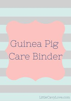 Helping you stay organized while you are busy taking care of your guinea pigs! Keep everything from their birth date to the next vet visit and weight chart all in one place! A safe food for guinea pigs list is also included, and a list of symptoms telling you when to take your guinea pig to the vet!   Guinea Pig Care Binder by LittleCavyLove on Etsy