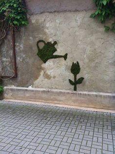 Vergessen Sie nicht, Ihre Pflanzen zu gießen! ;-)