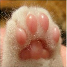 Kitty Cat Toes