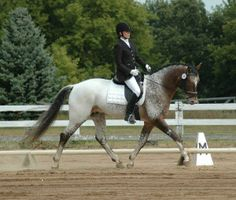 Custom Design | Dressage Horses For Sale | DressageMarket.com