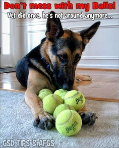 Wanna play ball? ...