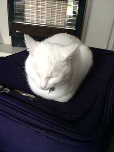 Misty's sleeping spots #9