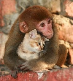 A monkey sharing her love with a kitten in Nagaon, Assam, India • photo: Diganta Talukdar on Flickr