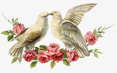View album on Yandex. Vintage Birds, Vintage Images, Vintage Art, Decoupage, Phoenix Art, Anatomy Art, Doodle Drawings, Graphic Design Art, Bird Prints