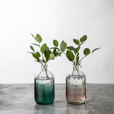 Willa Glass Vase - Magnolia Market | Chip & Joanna Gaines great in a country farmhouse style window sill or heck nearly any style