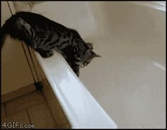 It's a video...Cats don't even like bathtubs, much less water