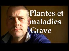 Plantes sauvages comestibles Attention aux Maladies graves - YouTube