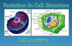 Variation in Cell Structure Lab Activity Science Resources, Learning Resources, Science Ideas, Teaching Ideas, Science Classroom, Classroom Activities, Classroom Ideas, Cell Theory, Plant And Animal Cells