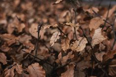 dried leaves in winter selective soft focus