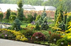 1. The European larch 'Pendula' 7. Yew 'Washingtonii' 2. Catnip of Fassina 'Walkers Low' 8. Yew 3. Blue spruce 'Maigold' 9. Viola, Anytine eyes 4. Thuja occidentalis 'Aurea' 10. Blooming weigela 'Nana Purpurea' 5. Blue spruce 'Glauca Compacta' 11. Korean weigela 6. Korean fir 12. Thuja occidentalis 'Danica'